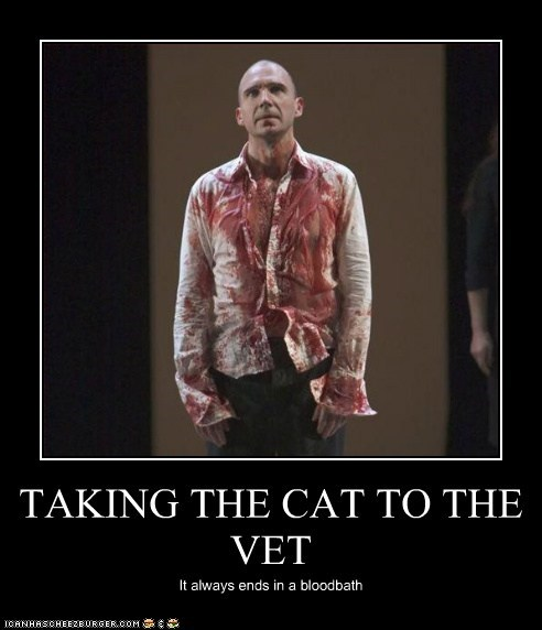 TAKING THE CAT TO THE VET