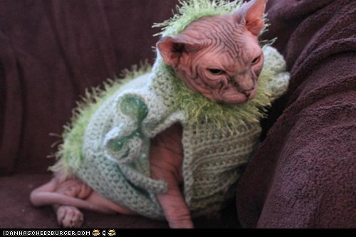 Cats,cyoot kitteh of teh day,dressed up,hairless,kitten,nekkid,sphynx,ugly