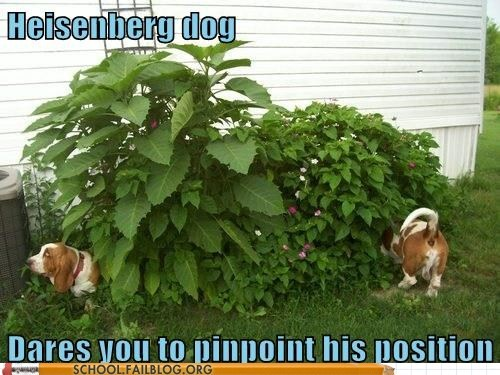 Damn You Heisenberg Dog!