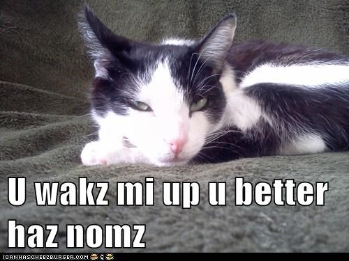 U wakz mi up u better haz nomz