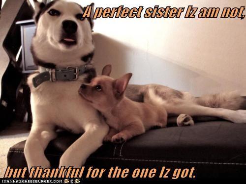 captions,cuddles,dogs,family,husky,love,sister