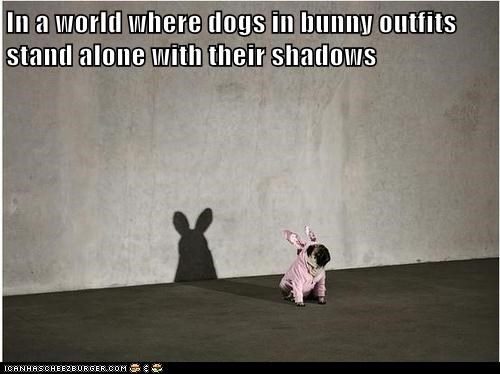 In a world where dogs in bunny outfits stand alone with their shadows