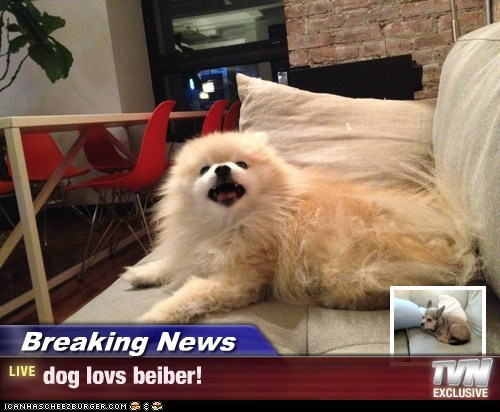 Breaking News - dog lovs beiber!