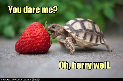 berry,captions,dare,eating,insist,pun,strawberry,turtle