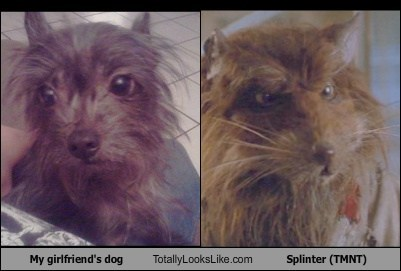 My Girlfriend's Dog Totally Looks Like Master Splinter (TMNT)