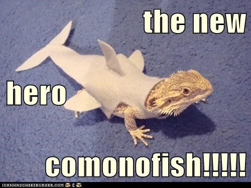 the new hero comonofish!!!!!