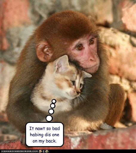 cat,expression,hugging,literally,monkey,monkey on your back,not so bad