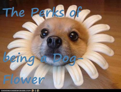 The Perks of  being a Dog-Flower