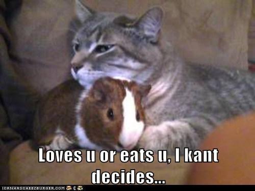 cant-decide,cat,dilemma,eat,guinea pig,love