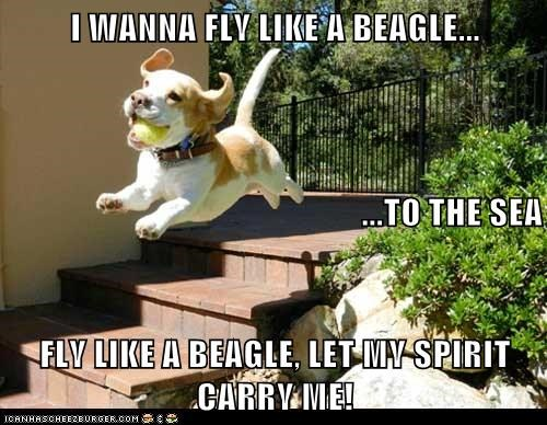 I WANNA FLY LIKE A BEAGLE... ...TO THE SEA FLY LIKE A BEAGLE, LET MY SPIRIT CARRY ME!