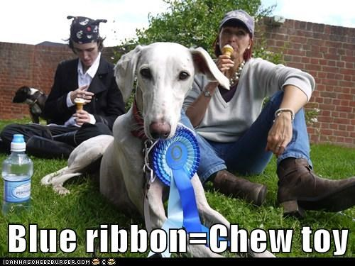 Blue ribbon=Chew toy
