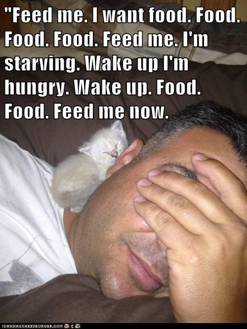 """Feed me. I want food. Food. Food. Food. Feed me. I'm starving. Wake up I'm hungry. Wake up. Food. Food. Feed me now."