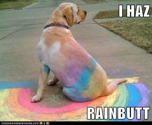 I HAZ  RAINBUTT