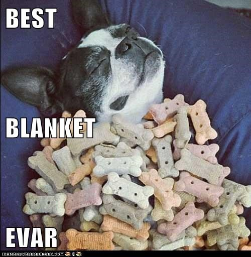 blanket,boston terrier,captions,cookies,dogs,dogs allowed,dream