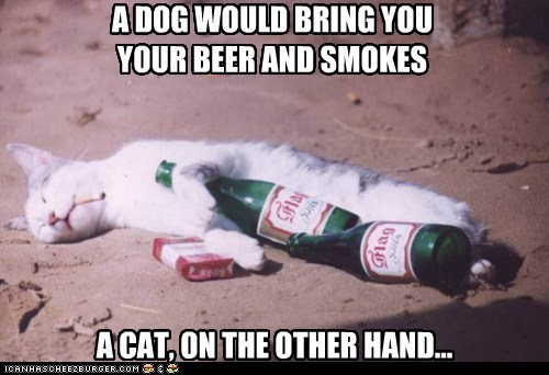 alcohol,captions,Cats,cigarettes,Compare And Contrast,comparison,dogs,drink,drunk,lolcats,passed out,pass out,smoke,smoking,steal