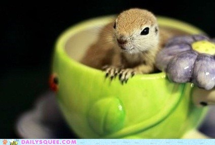 squee,squirrel,whiskers,cup,sugar,tea,baby,categoryimage,lolcats