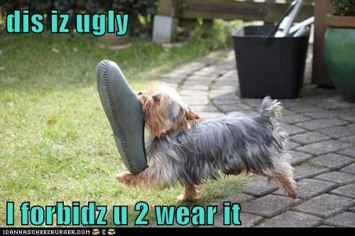 crocs,dogs,fashion faux pas,shoes,yorkie,yorkshire terrier