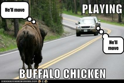 PLAYING  BUFFALO CHICKEN