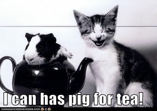I can has pig for tea!