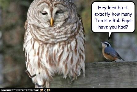 birds,commercial,fat,lard,Owl,tootsie roll pop