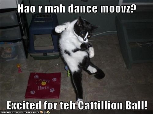 Hao r mah dance moovz?  Excited for teh Cattillion Ball!