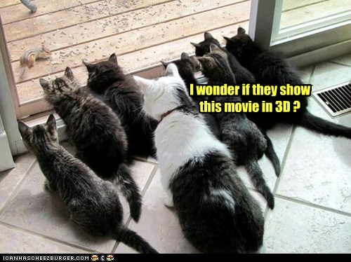 3d,captions,Cats,chipmunk,chipmunks,food,glass door,lolcats,lots of cats,Movie,movies,noms,prey,watch,watching