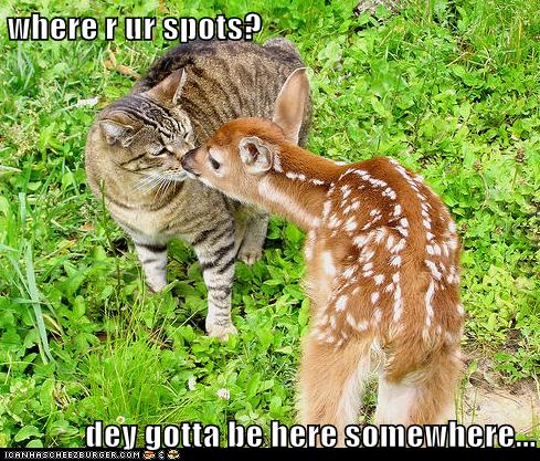 baby deer,cat,deer,somewhere,spots,stripes,tabby,where
