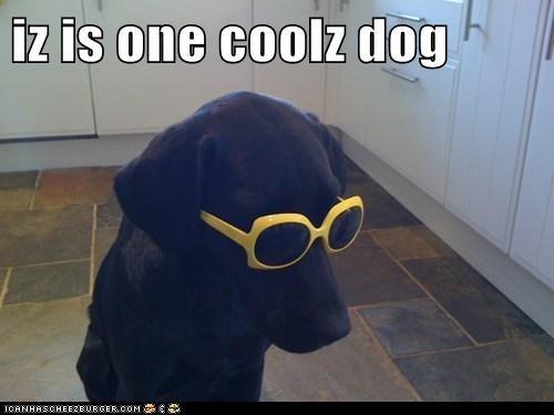 iz is one coolz dog