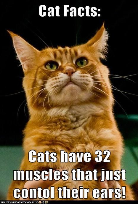 Cats have 32 muscles that just contol their ears!
