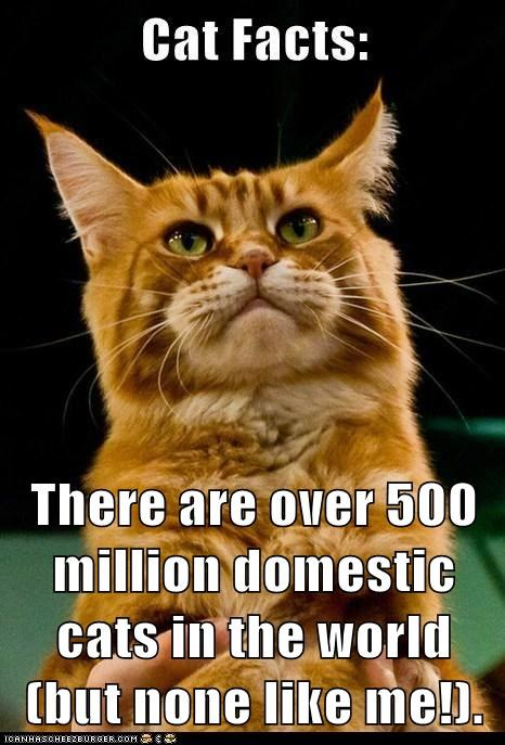 There are over 500 million domestic cats in the world (but none like me!).