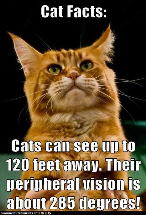 Cats can see up to 120 feet away. Their peripheral vision is about 285 degrees!