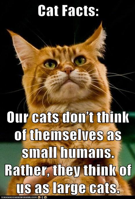 Our cats don't think of themselves as small humans. Rather, they think of us as large cats.