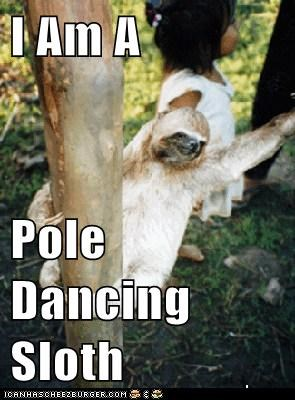 I Am A  Pole Dancing Sloth