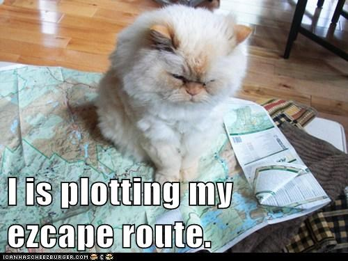 I is plotting my ezcape route.