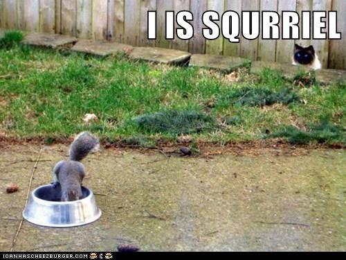 I IS SQURRIEL
