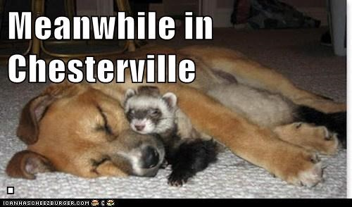 Meanwhile in Chesterville  .