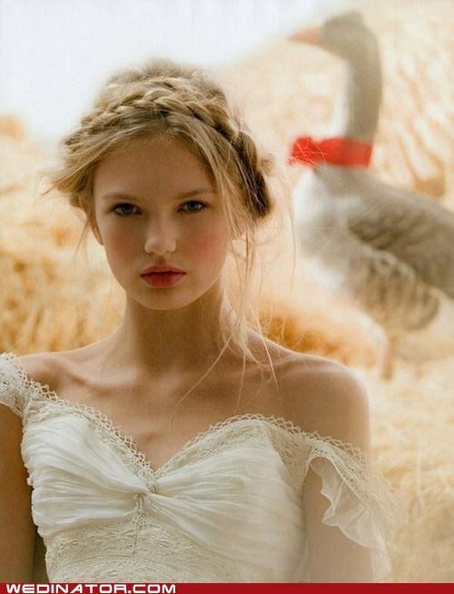 bride,funny wedding photos,geese,goose