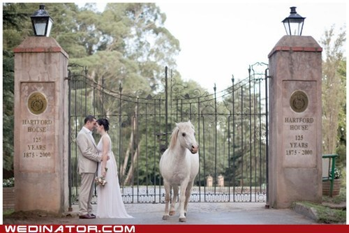 bride,couple,funny wedding photos,groom,horses,KISS,ponies