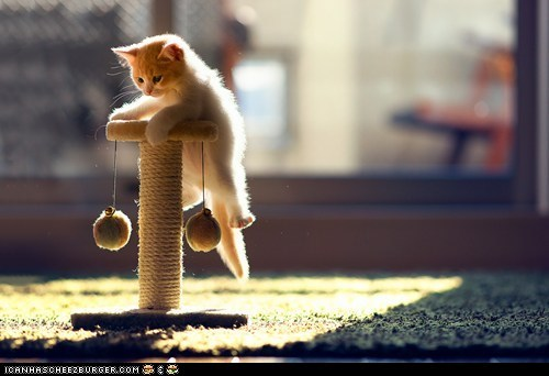 Cyoot Kitteh of teh Day: Kitteh's Big Climb