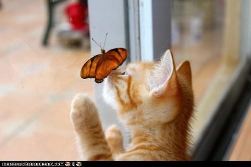 butterflies,Cats,cyoot kitteh of teh day,Interspecies Love,kitten,nose boop,windows