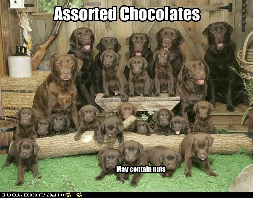 I Has A Hotdog: Assorted Chocolates