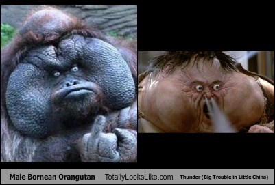 Male Bornean Orangutan Totally Looks Like Thunder (Big Trouble in Little China)