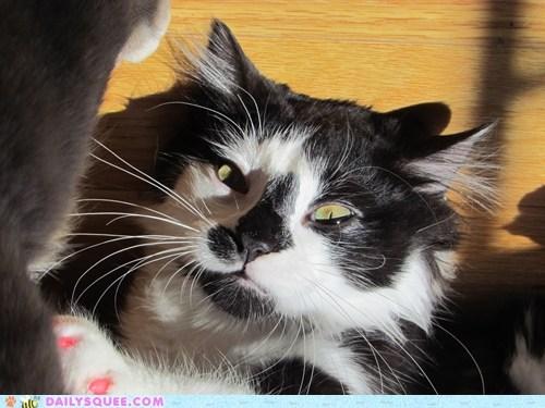 Reader Squee: Longest Whiskers