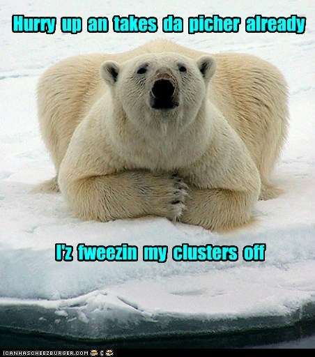 clusters,cold,freezing,hurry up,ice,polar bear