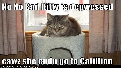 No No Bad Kitty is depwessed  cawz she cudn go to Catillion