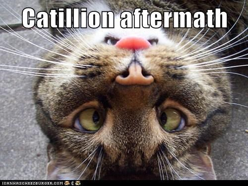 Catillion aftermath
