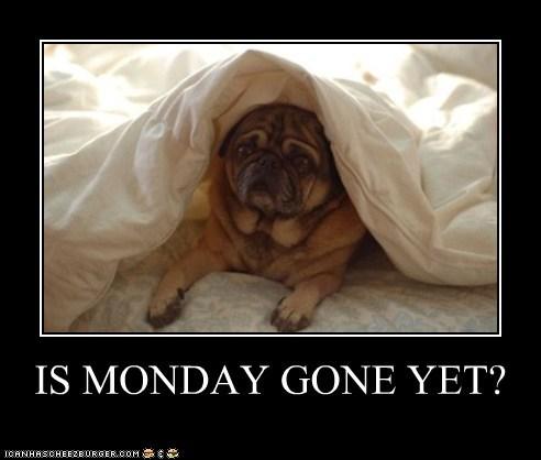 bed,blanket,dogs,i hate mondays,monday,pug,sad dog