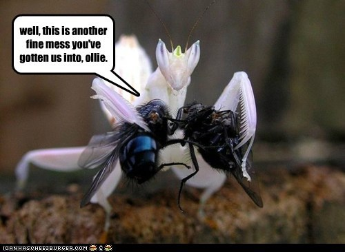 flies,last time,laurel and hardy,listen,ollie,praying mantis,quotes