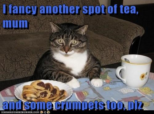 lolcat crumpets