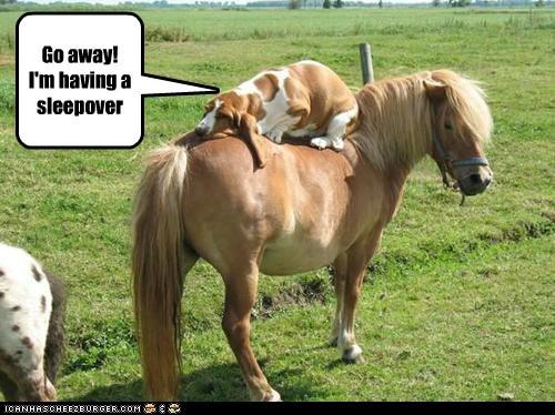 basset hounds,dogs,horse,nap,pony,sleepover